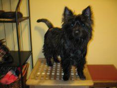 My dog! His name is Izum (raisin).