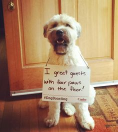 Looks like your #training from Canine Company is really paying off, Ted! Such good manners! #dogboasting  #caninecompany #dogtraining #caninemanners #politedog #notashamed #smartdogs #dogobedience #wheatonterrier