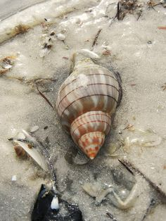 Sanibel Island, Florida is known for it's shells. Go there and do the Shell Stoop!