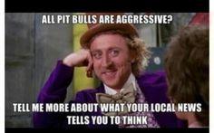 Pit bull love