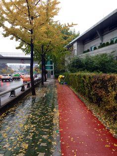 Seoul,rainy&fall