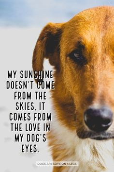 My Sunshine Doesn't Come From The Skies..... Dog, Dog Quotes, Inspirational Quotes, Funny Quotes, Life Quotes