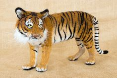 Kumal the Tiger: Needle felted animal sculpture by TheWoolenWagon on Etsy https://www.etsy.com/listing/278737262/kumal-the-tiger-needle-felted-animal