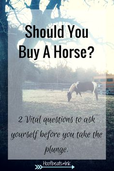 Should you buy a horse? 2 Vital questions to ask yourself before you take the plunge - via Hoofbeats and Ink.