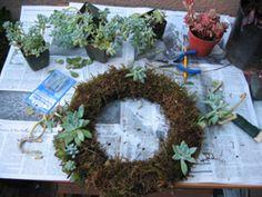 succulent wreath tutorial