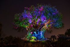 """Jennifer Fickley-Baker, informou no blog oficial da Disney, que a partir da semana em que se comemora o """"Dia da Lembrança"""" (Memorial Day),..."""