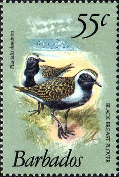 Barbados 1979 Birds SG 633a Fine Mint SG 633a Scott 506a Other West Indies Stamps HERE
