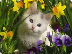 Flores de Bach para Gatos