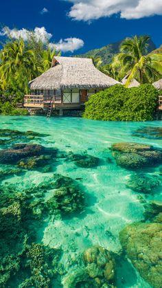 Tropics-Palm-Trees-Ocean-Vacation-Shore-iPhone-6-wallpaper.