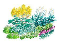 Istutussuunnitelma: varjoisan paikan perennat | Meillä kotona Monet, Herbs, Garden, Plants, Cottage, Design, Garten, Lawn And Garden, Cottages