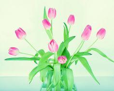 Kwiat, Tulipan, Wiosna, Wazonów, Pastel, Wazon, Bukiet