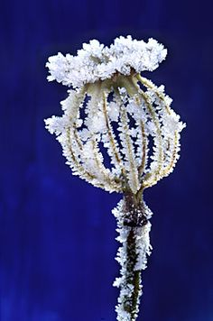 Frosted Poppy - by Andy Small.  He's captured wonderful form and detail.