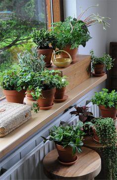 kitchen ideas – New Ideas Interior Garden, Interior Plants, Garden Shop, Garden Pots, Indoor Garden, Indoor Plants, All About Plants, Tiny Studio, Good Old Times