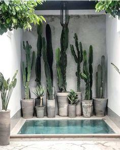 For cactus lovers everywhere via 🌵 📷 / design at . Outdoor Spaces, Outdoor Living, Kleiner Pool Design, Decoration Plante, Cactus Plants, Cactus Art, Cactus Flower, Succulents Garden, Cactus Drawing