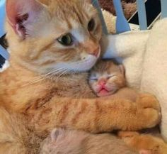 Mom and kitty...
