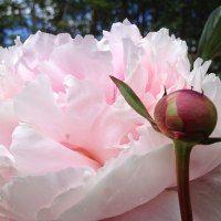 Just added my InLinkz link here: http://moseplassen.com/2015/03/rosa-blomster/