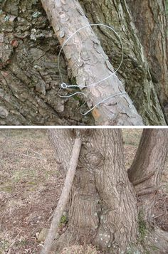 There are seemingly as many different traps as there are creatures to catch, but we've selected the 15 best snare and deadfall traps for you to master.