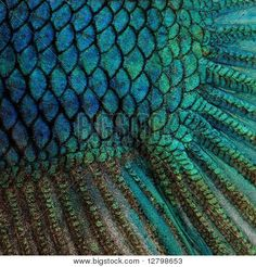 tropical fish scales - Google Search
