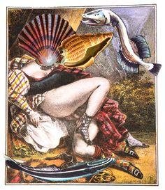 'Mollusc Lust: The Scots'