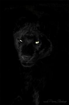 Shadow Animals - Panther