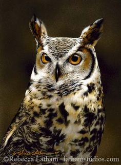 Great Horned Owl Portrait by Rebecca Latham - small.jpg   Flickr - Photo Sharing!
