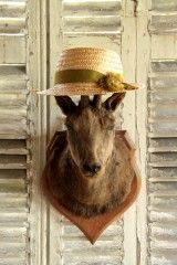 http://www.lanouvelleraffinerie.com/2251-thickbox/cabinet-de-curiosites-trophee-chamois-sur-ecusson.jpg