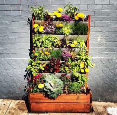 A DIY vertical garden to brighten up Clovelly road in Sydney.
