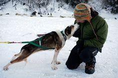 Alaska, Dogsleds and Humans