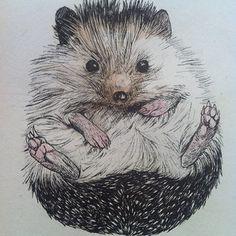 drawing by @kittylovemitten - biddythehedgehog