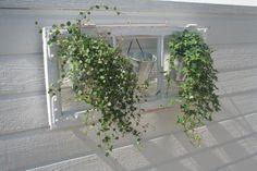 Gamle vinduer som blomsteroppheng :)