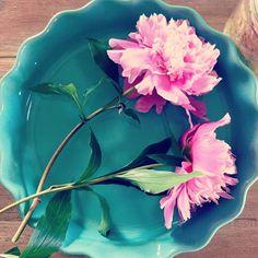 Dax o testa min nya pajform jag fyndade på #ÖoB för bara 39:90 och baka sommarens första rabarberpaj #love #baking #timetobake #picoftheday #flowers