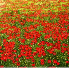 Resultado de imagen de dibujos paisajes con flores