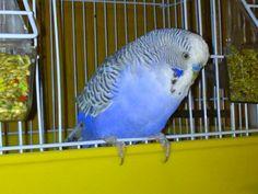 Parrot, Bird, Parrot Bird, Birds, Parrots