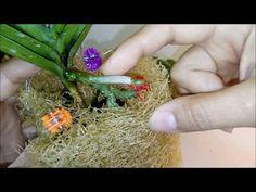 Como Está a Vanda que Plantei na Bucha Vegetal ( Orquídea) - YouTube