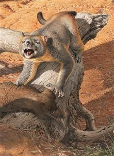 Capable of climbing trees. New study suggests that the Marsupial Lion was an agile climber.