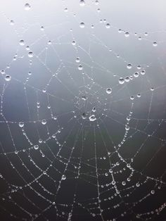 tulliani, Drops Of Water On A Spiderweb