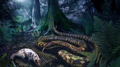 Ancient snakes were nocturnal hunters with tiny legs - CBS News