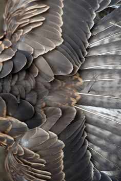 Texture : Feather / Plume
