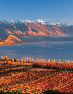 Congratulations to Wanaka, named two of the top South Pacific destinations on the rise by TripAdvisor! It's stunning any time of year - an international holiday destination with the warmth of small town living