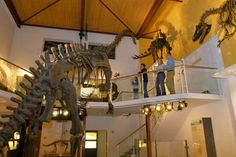 Aathal Dinosaur Museum - Museum - outside of zurich, accessible by train (day trip) Swiss Days, Dinosaur Museum, Training Day, Day Trips, Switzerland, Sweet Home, Fair Grounds, Chandelier, Tours