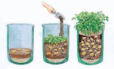 Potato cultivation on balcony and terrace – Kartoffelanbau auf Balkon und Terrasse – Garden Types, Terrace Garden, Garden Planters, Gardening For Beginners, Gardening Tips, Planting Potatoes, Grow Potatoes, Plant Bags, Balcony Plants