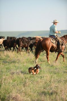 Gathering Cattle by Ree Drummond / The Pioneer Woman, via Flickr