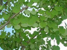 常緑樹と落葉樹~シンボルツリーにおすすめ!7選~