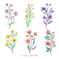 Watercolor Cards, Watercolor Flowers, Watercolor Background, Photo Deco, Watercolor Paintings For Beginners, Floral Drawing, Botanical Illustration, Flower Tattoos, Doodle Art