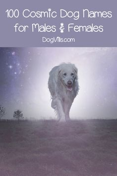 If you're looking for the best cosmic dog names for your out-of-this-world pooch, you'll love our list! Check out the top 100 ideas for males & females!  #dognames #dogadoption #dogadvice #dogvills Best Dog Names, Cat Names, Cute Female Dog Names, Funny Cats And Dogs, Dog Signs, Girl And Dog, New Puppy, Dog Pictures, Yorkie