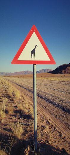 Mon aventure en Namibie, à la rencontre d'animaux sauvages...