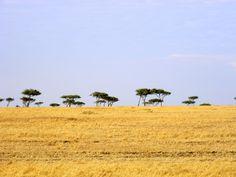 Maasai Mara Kenya [OC] [4000x3000]