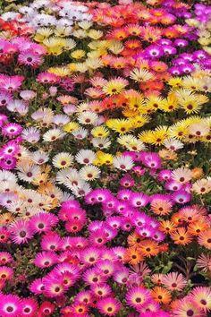 The Perfect World. Garden Privacy, Garden Landscaping, Garden Beds, Garden Plants, Perfect World, Whimsical, Succulents, Floral, Pretty