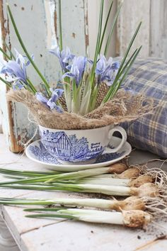 miniature dutch iris / pale blue flower bulbs in a blue and white teacup