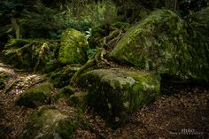 Germany / Black Forest - Triberg | Flickr - Photo Sharing!